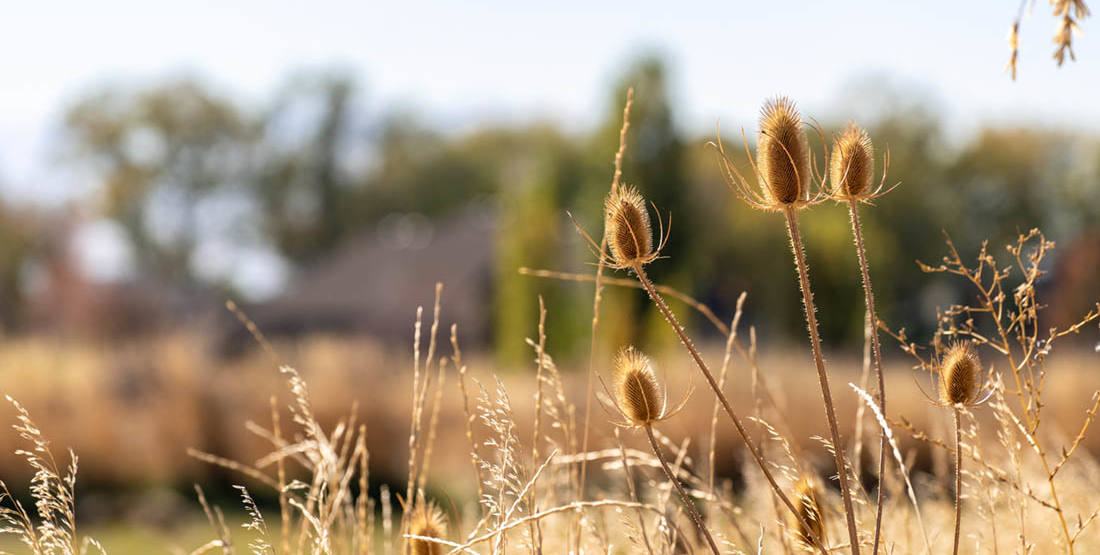 West Davis Area Wetlands